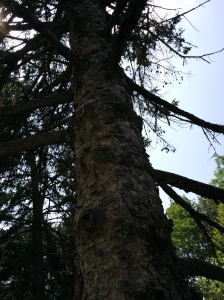 Typical photo of trees for identification.