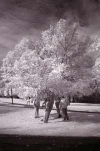 Infrared photo of local tree, showing leaf health.